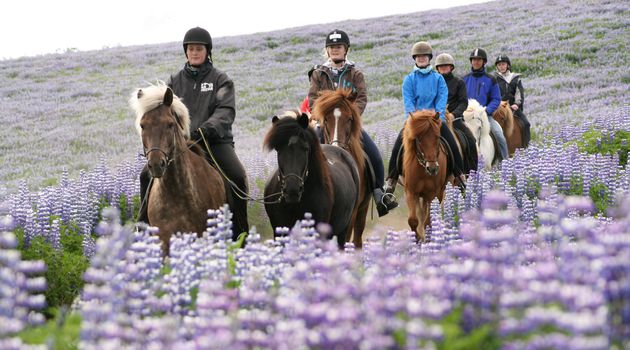 Group of Horseback Riders in Lava Fields